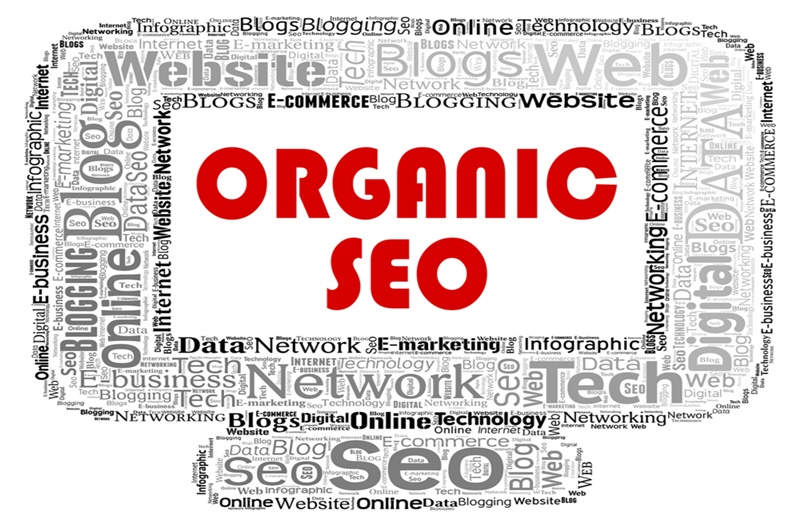 The Role of Organic Traffic in Your Marketing Strategy